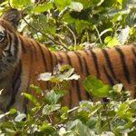 Dudhwa Tiger Reserve