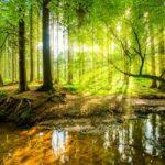 सामुदायिक वन संसाधन